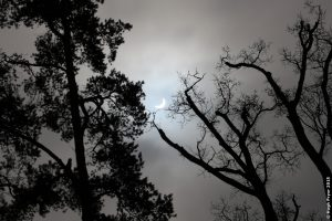Solar eclipse through trees