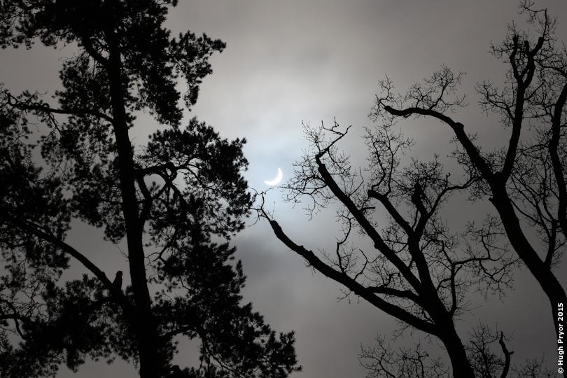 Solar eclipse through trees