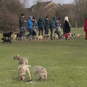 port_meadow_dogs-thumbnail