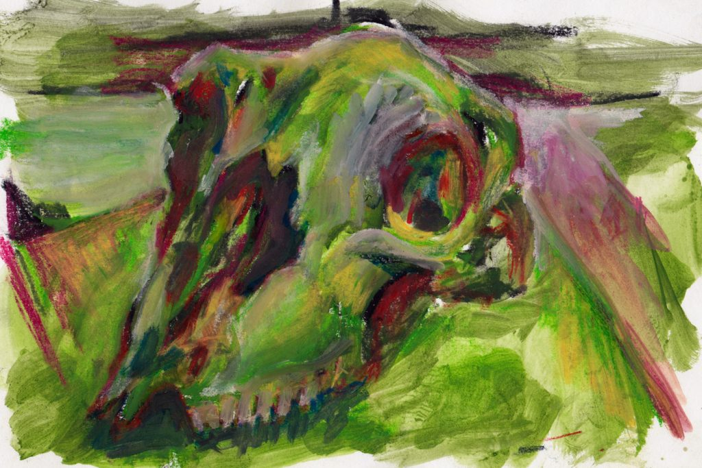 sheep-skull2
