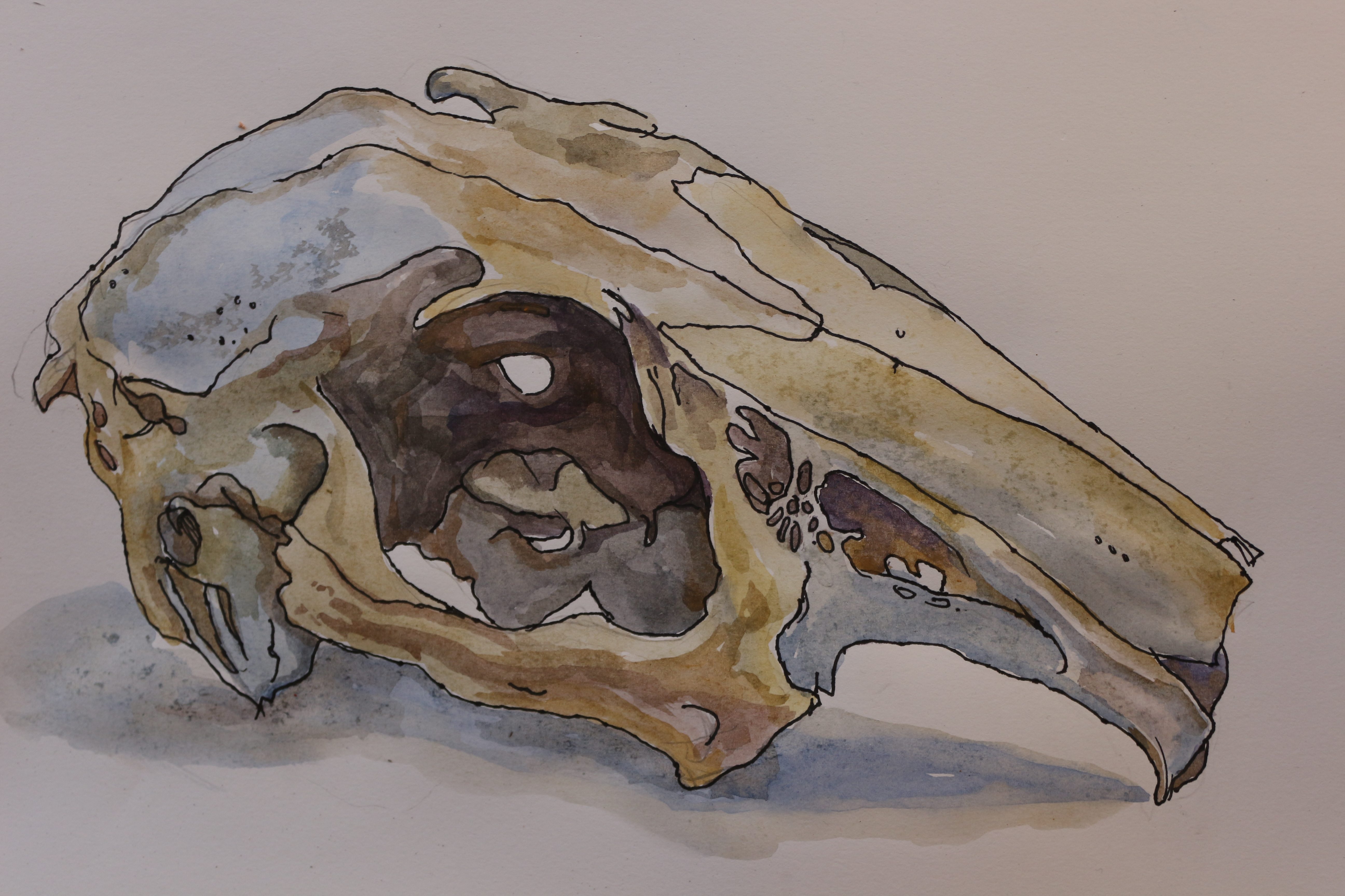 Skull Animal Oil Painting