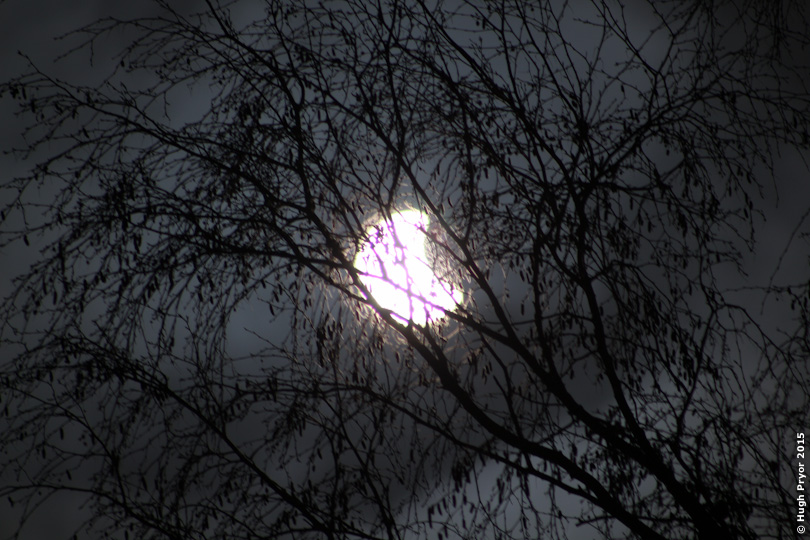 Eclipse through trees